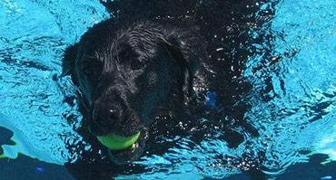 Special Events Doggie Swim Day